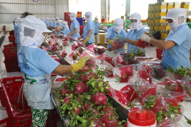 越南农产品和家禽出口活动较为乐观 hinh anh 1