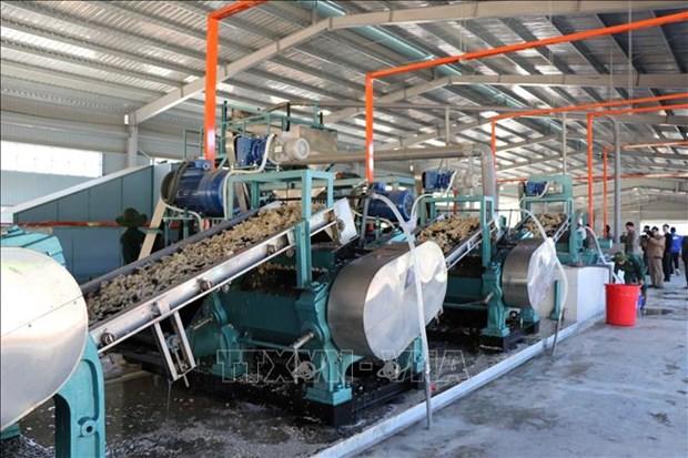 越南橡胶工业集团在越南北部投资兴建三个加工厂 hinh anh 1