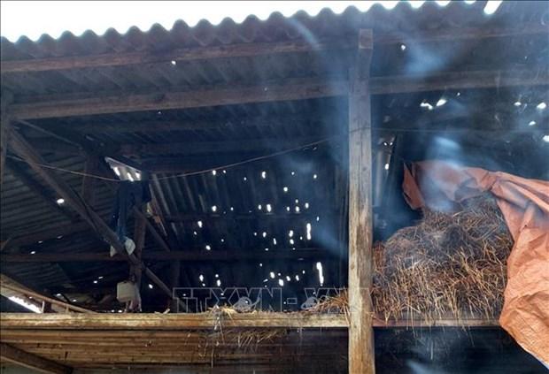 越南北部山区各省遭受冰雹袭击造成巨大损失 hinh anh 1