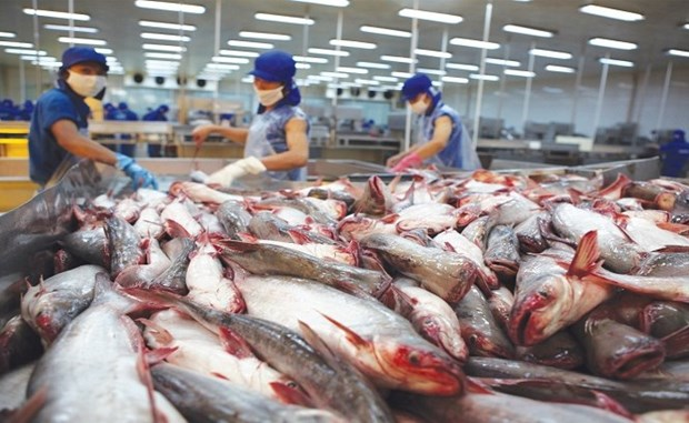 越南查鱼对美出口呈激增态势 hinh anh 1