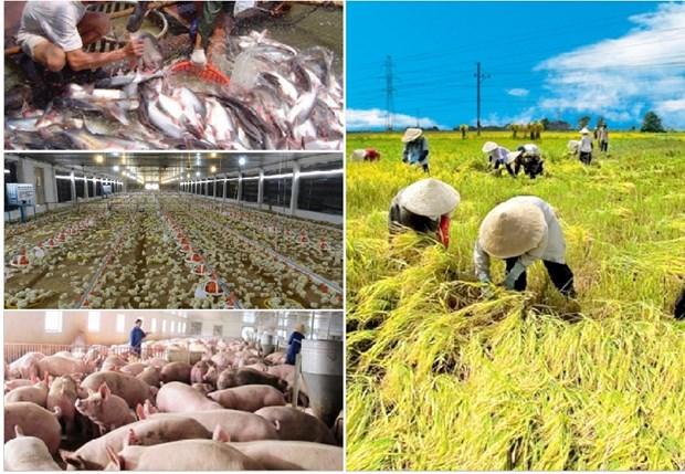 越南农业产业迎来价值链重组的机会 hinh anh 2