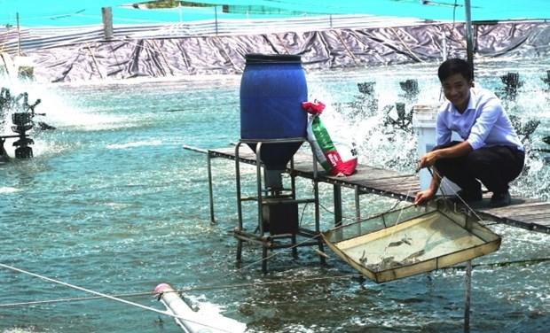 金瓯省力争实现虾产量增长8%的目标 hinh anh 1