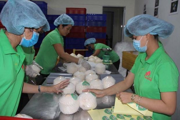 槟椥省着力实现市场多样化 助推农产品销售 hinh anh 1