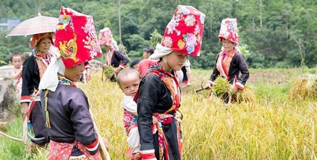 将性别平等问题纳入少数民族可持续发展计划 hinh anh 1
