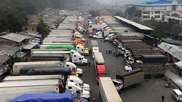 越南农产品对中国出口活动开始恢复但货物通关速度缓慢 hinh anh 1