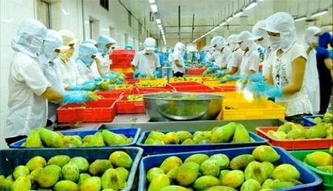 越南农业部门保持今年出口总额达420亿美元的目标 hinh anh 1