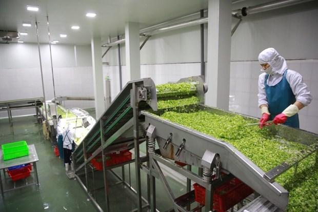 越南企业致力对俄罗斯出口蔬菜罐头树立越南品牌形象 hinh anh 1