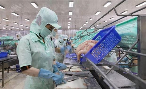 越南査鱼行业:将挑战化为机遇 hinh anh 1