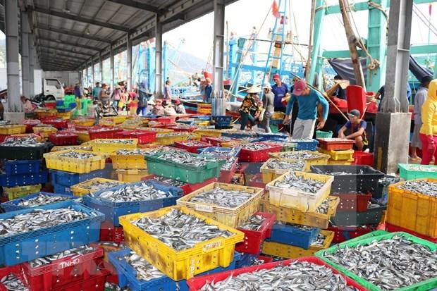 实现渔业可持续发展 带来更高经济价值 hinh anh 1