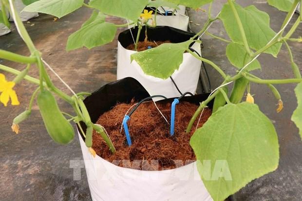 北宁省优先吸引对高科技农业的投入 hinh anh 1