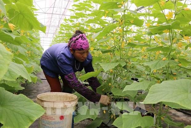 北宁省优先吸引对高科技农业的投入 hinh anh 2