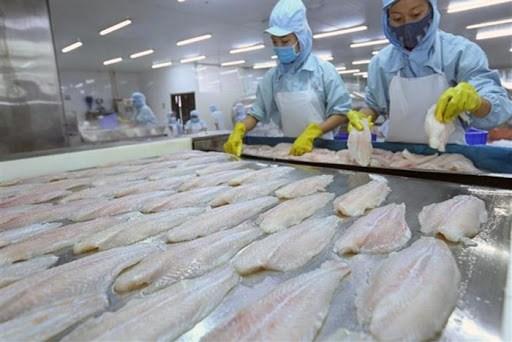 越南查鱼对美、中两大市场的出口活动释放出积极信号 hinh anh 1