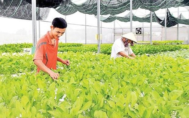 多家企业将对巴地头顿省高科技农业项目进行投资 hinh anh 1