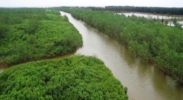 减轻经济社会发展活动对太平省太瑞湿地保护区带来的负面影响 hinh anh 1