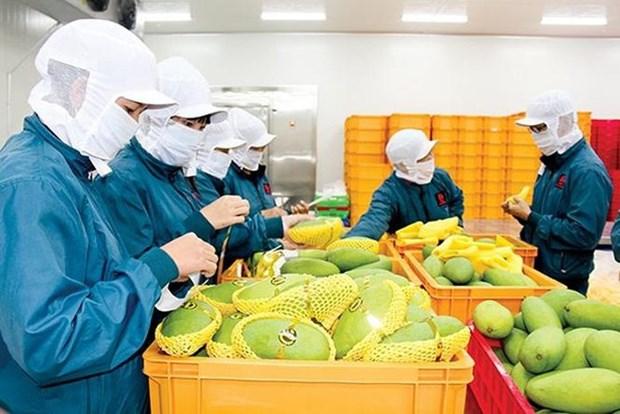 2020年第一季度越南蔬果出口额达到8.36亿美元 hinh anh 1