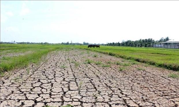 5300亿越盾协助九龙江三角洲8省防治干旱和海水入侵 hinh anh 1