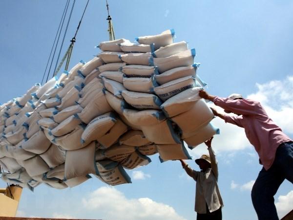 政府总理指导为大米出口活动化解困难 hinh anh 1