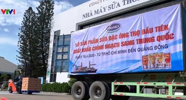 越南Vinamilk公司向中国出口首批炼奶 hinh anh 1