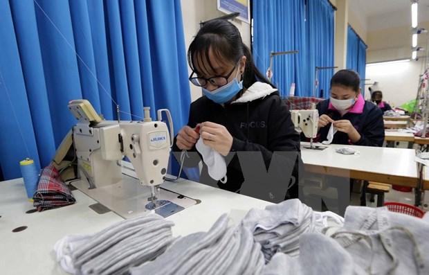 越南10号制衣公司集中精力按订单生产抗菌口罩 hinh anh 1