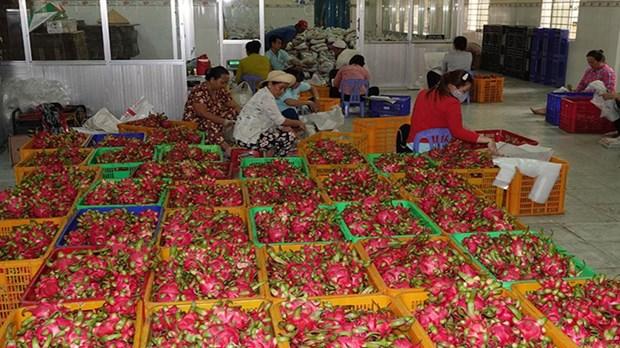 前江省实现水果产销对接 hinh anh 1