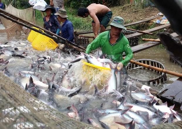 越南水产品对中国出口恢复增长 hinh anh 1