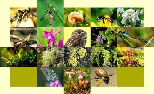 越南举行各项活动响应2020年国际生物多样性日 hinh anh 2