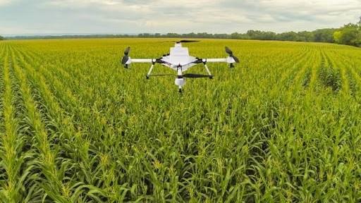 农业在疫情形势中扮演支柱角色 hinh anh 1