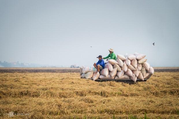 越南工贸部提议政府取消出口配额限制 hinh anh 1