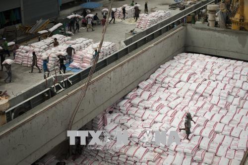 2020年前4月柬埔寨大米出口量猛增 hinh anh 1