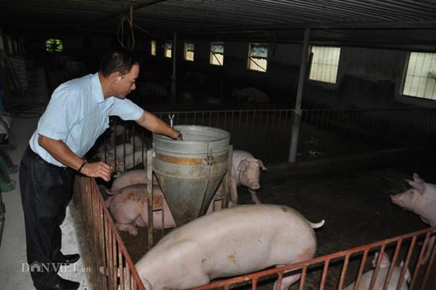 农业与农村发展部部长:快速促进生猪复养但需谨慎和确保安全 hinh anh 2