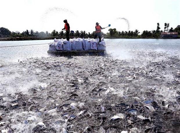 越南查鱼今年第三季度有望完全恢复正常 hinh anh 2