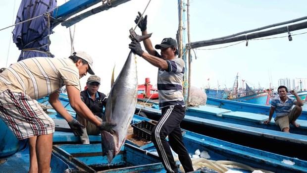 中国所颁发的休渔令对越南毫无价值 hinh anh 1
