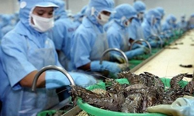 越南虾类出口有望达38亿美元 hinh anh 1