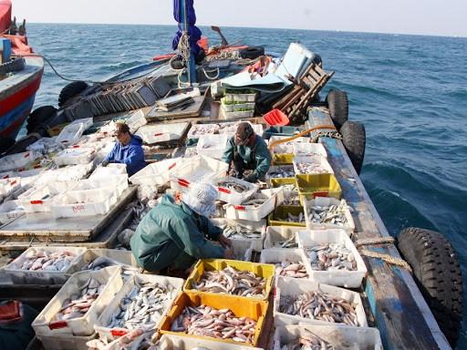 越南努力为渔业解除黄牌警告 hinh anh 1