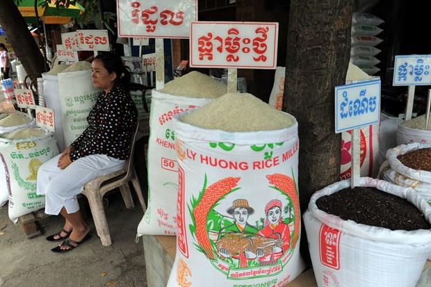 柬埔寨放宽部分限制措施助推经济发展 hinh anh 1