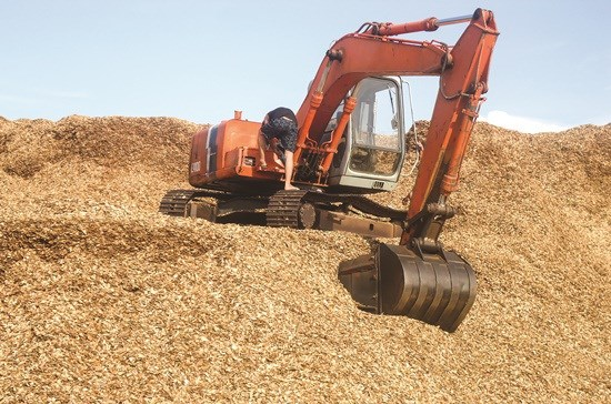 广义省木屑出口面临巨大的困难 hinh anh 1