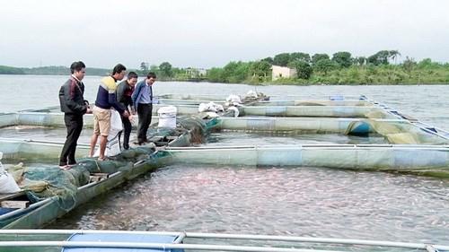 网箱养鱼模式帮助奠边省居民提高收入 hinh anh 1