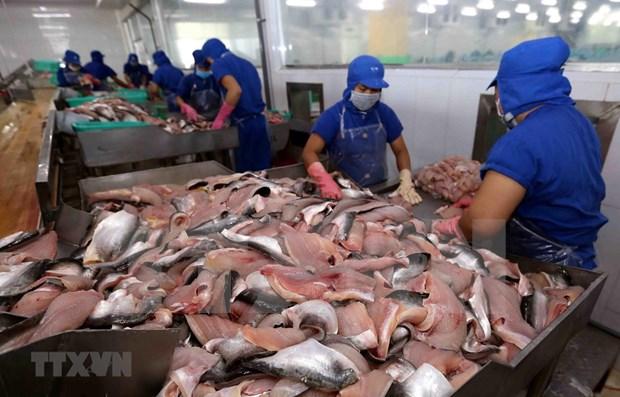 越南查鱼迎来突飞猛进的机遇:出口恢复正常 hinh anh 1