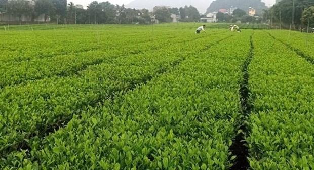 推动农场经济可持续发展 hinh anh 1