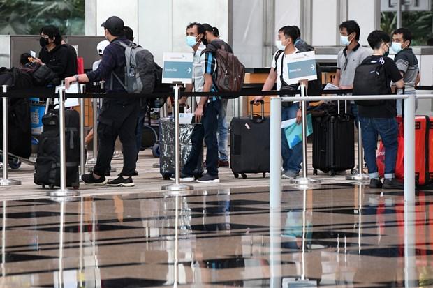 新加坡航空采取系列措施遏制疫情蔓延 hinh anh 1