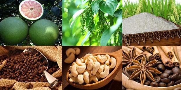 质量认证是越南农产品进军欧洲市场的金钥匙 hinh anh 1