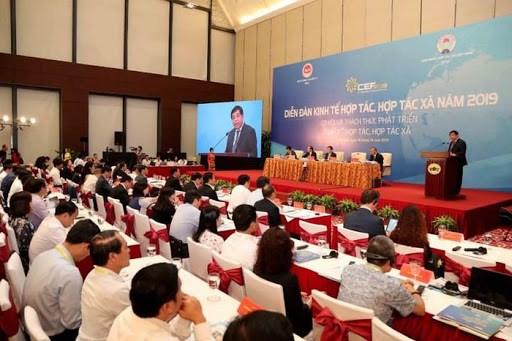 2020年合作经济、合作社论坛将于今年第三季度举行 hinh anh 1
