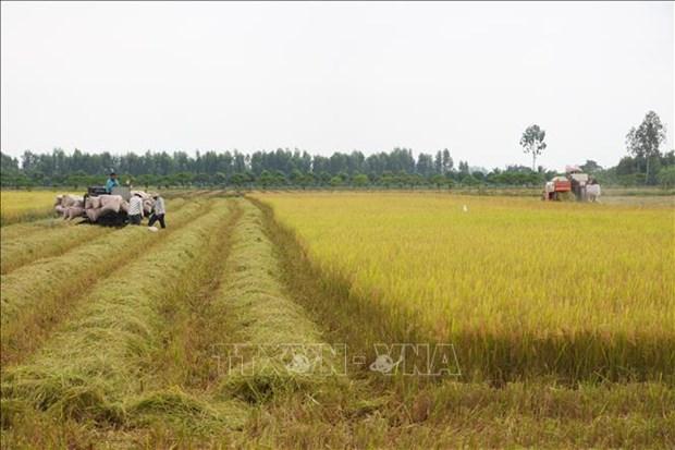 一周农产品市场:稻谷价格稳定 咖啡价格下降 hinh anh 1