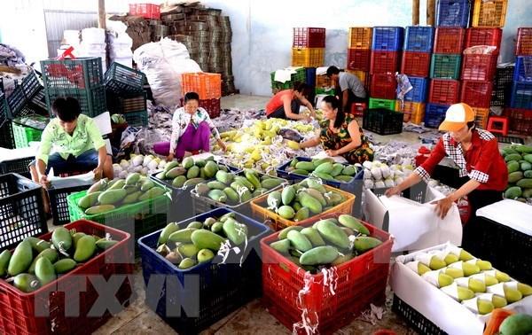 2020年上半年越南蔬果出口额达到15亿美元 hinh anh 1