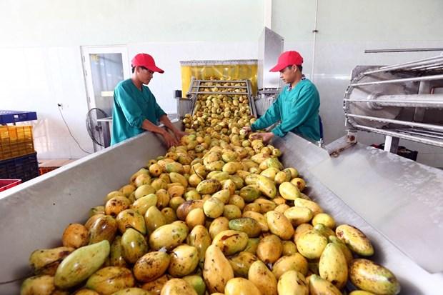 加工蔬果出口额增长潜力巨大 hinh anh 2