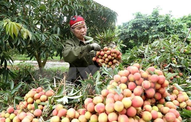 将越南农产品与食品深入进军中国市场 hinh anh 1