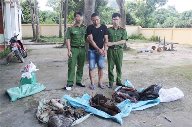 乂安省警察查获一起非法跨境运输大量濒危动物案件 hinh anh 1