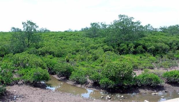 太平省泰瑞湿地自然保护区正式成立 hinh anh 1
