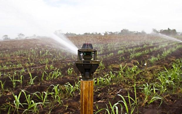 越南水稻可采取以色列滴灌技术模式 hinh anh 1