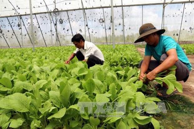 柬埔寨将与日本企业签署蔬菜合作,投资与发展谅解备忘录 hinh anh 1